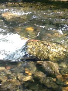 Water over rocks, Big Chico Creek, JHD