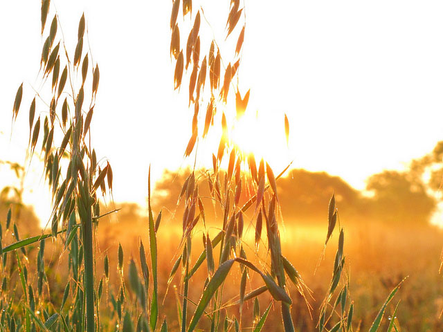 Farming Tzedakah: The Gleanings and Corners of Your Field