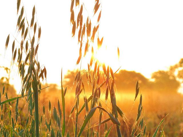 Farming Tzedakah: The Gleanings and Corners of Your Field