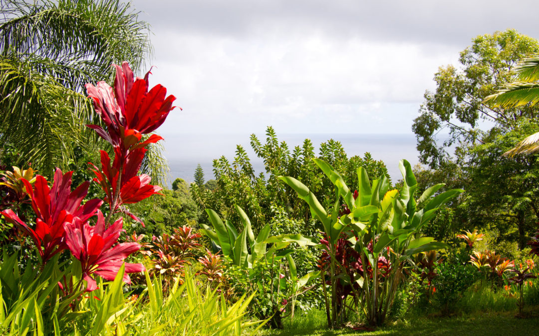 Garden of Eden, Maui, Yimmy149 via Flickr