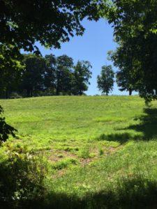 Meadow, Rockefeller State Park Preserve, JHD