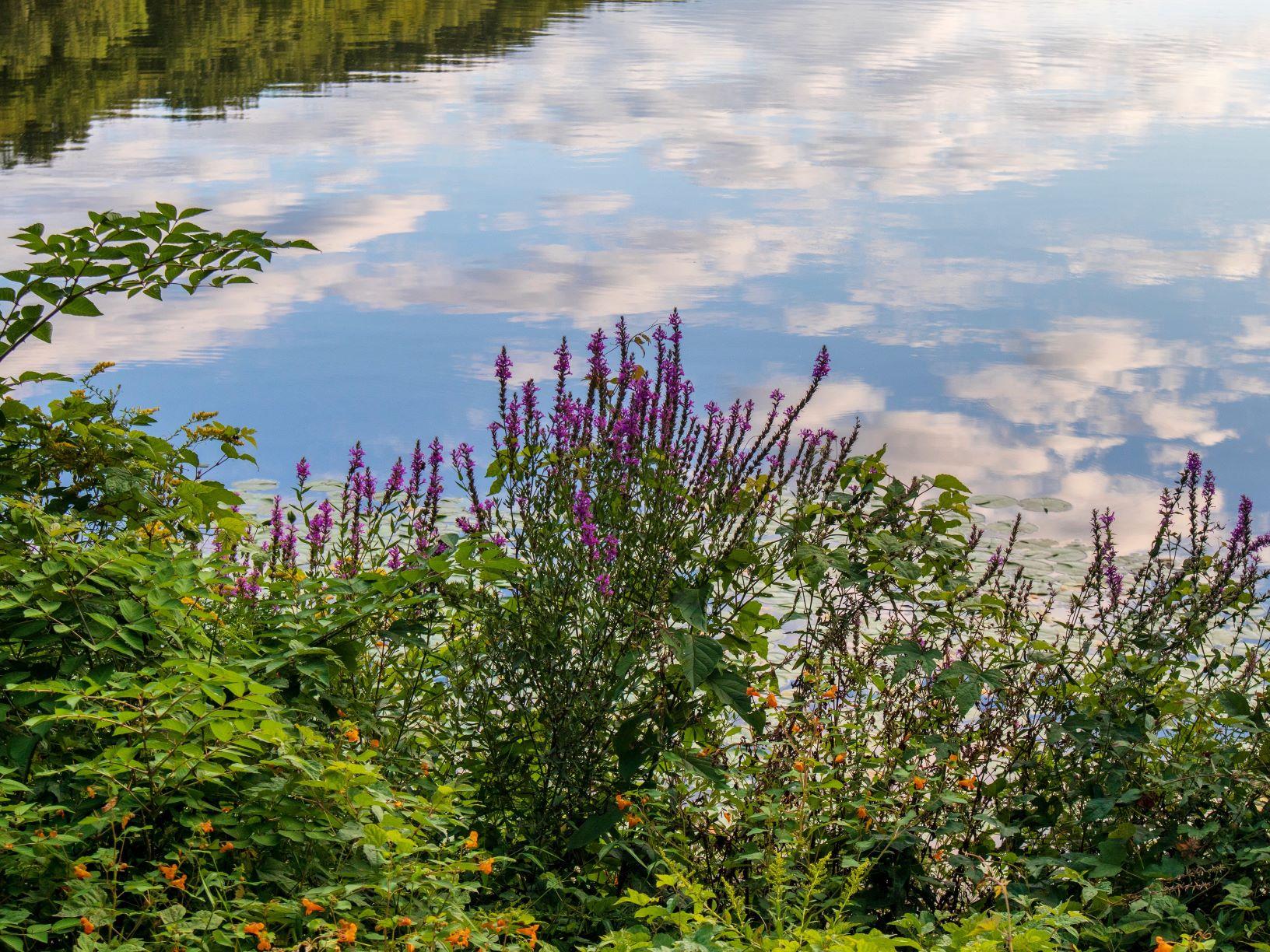 Lakeside Reflections, JHD