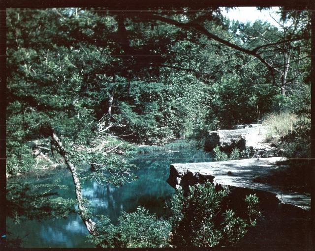 My Garden of Eden–And Yours