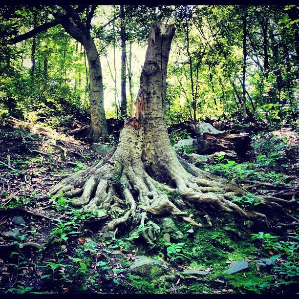 The Tree of Life: Divine Wisdom
