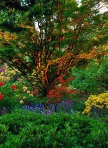 Public garden in British Columbia, via Flickr