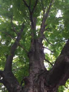Tree in Mahopac, New York