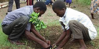 Planting tree in Haiti via tcktcktck.org