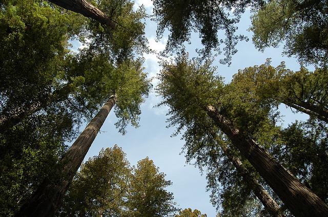 Tikkun Olam: Trees and the Environment
