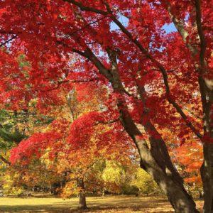 autumn foliage in New York