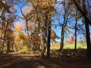 Rockefeller State Park Preserve Autumn trail