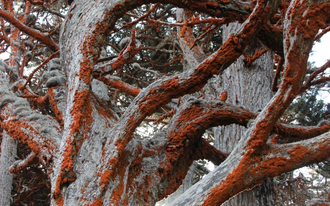 At Point Lobos State Natural Reserve, Elisheva Danan
