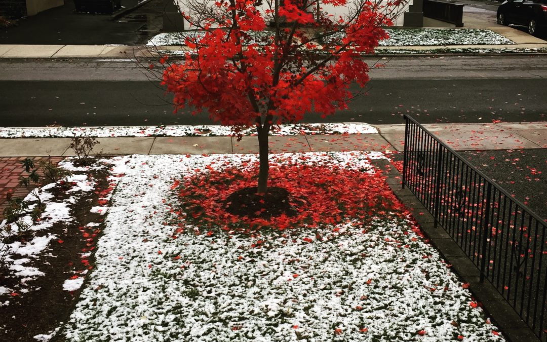 Tree with red leaves in the new snow