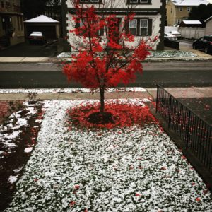 First snow of the season, JHD