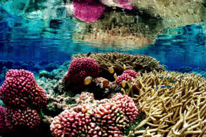 Coral reef ecosystem at Palmyra Atoll National Wildlife Refuge. Photo cedit: Jim Maragos/U.S. Fish and Wildlife Service