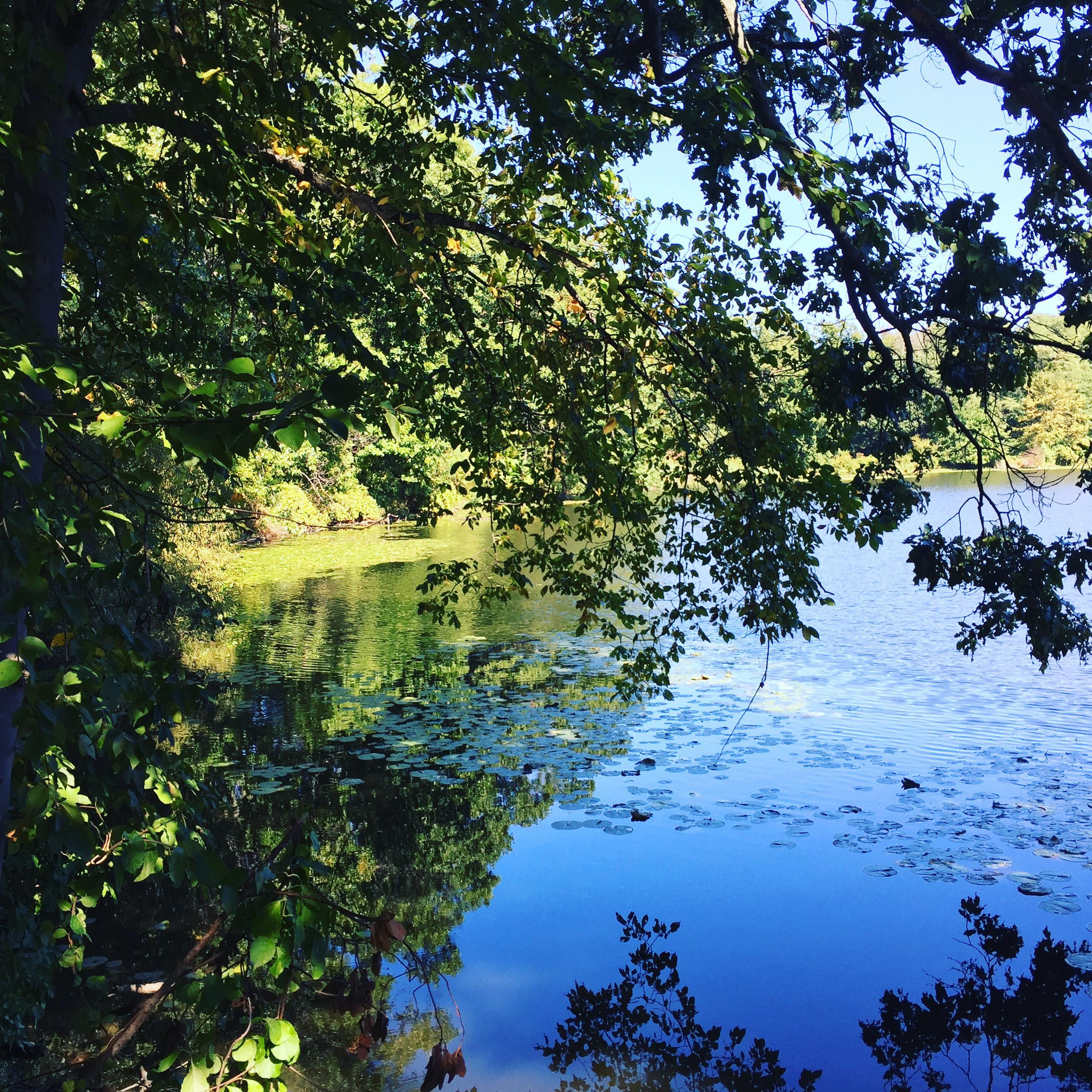 Rockefeller State Park Preserve, JHD