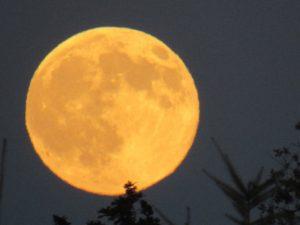 Full Moon, Niculina Archer