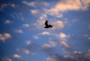 Rock Dove by Cuatrok77 via Flickr