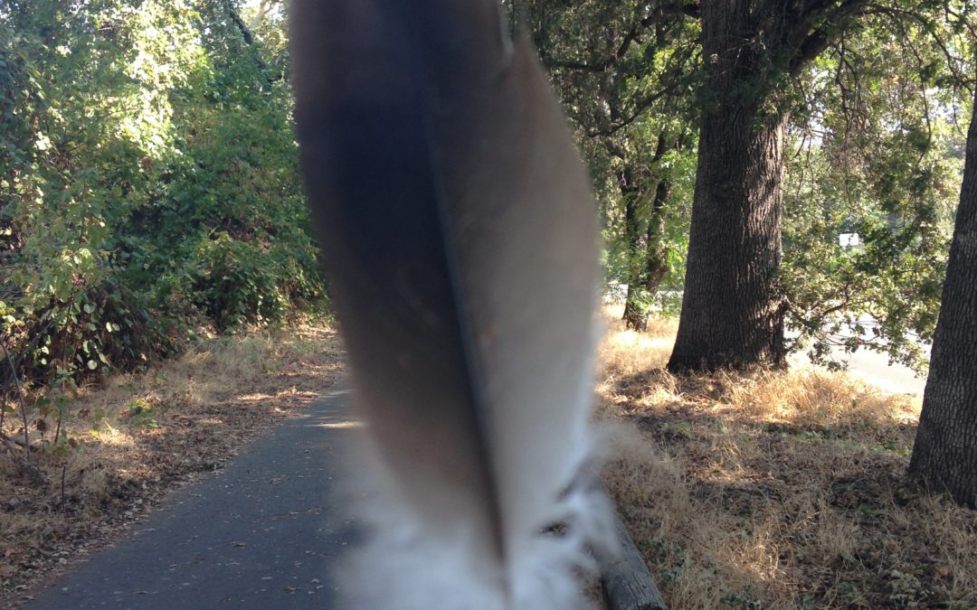 Feather at Bidwell Park, JHD