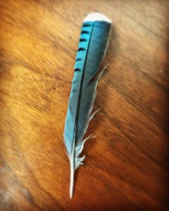 Blue Jay Feather, JHD