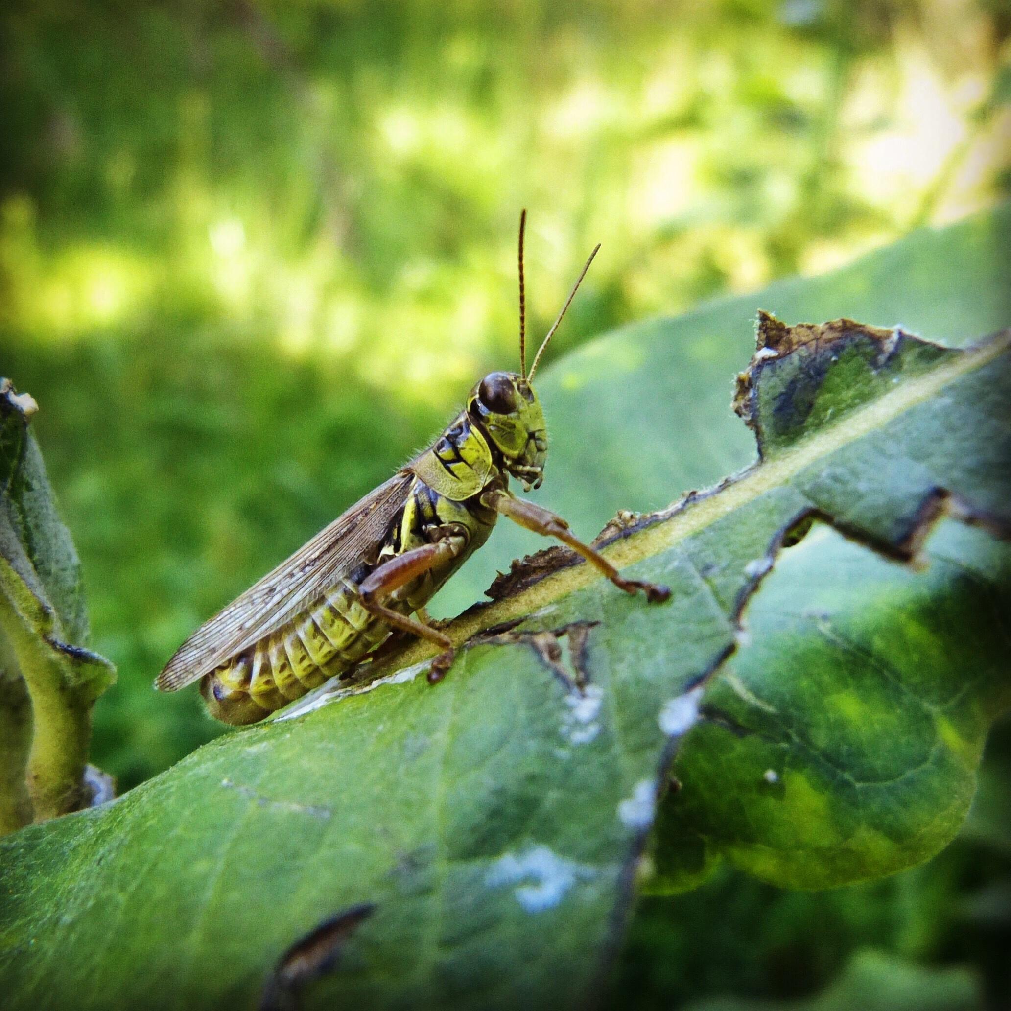Cricket, JHD