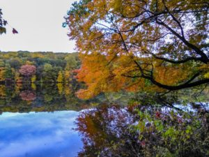 Autumn at Rockefeller State Park Preserve, JHD