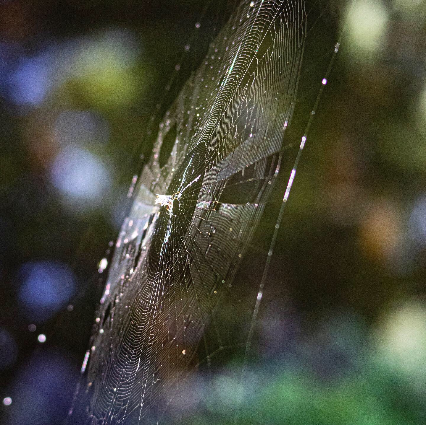Spider Web 2, JHD