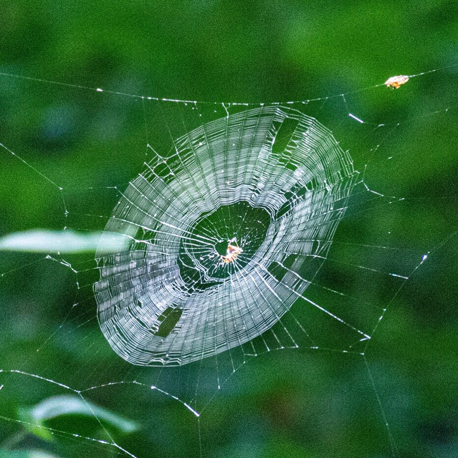 Spider Web 1, JHD